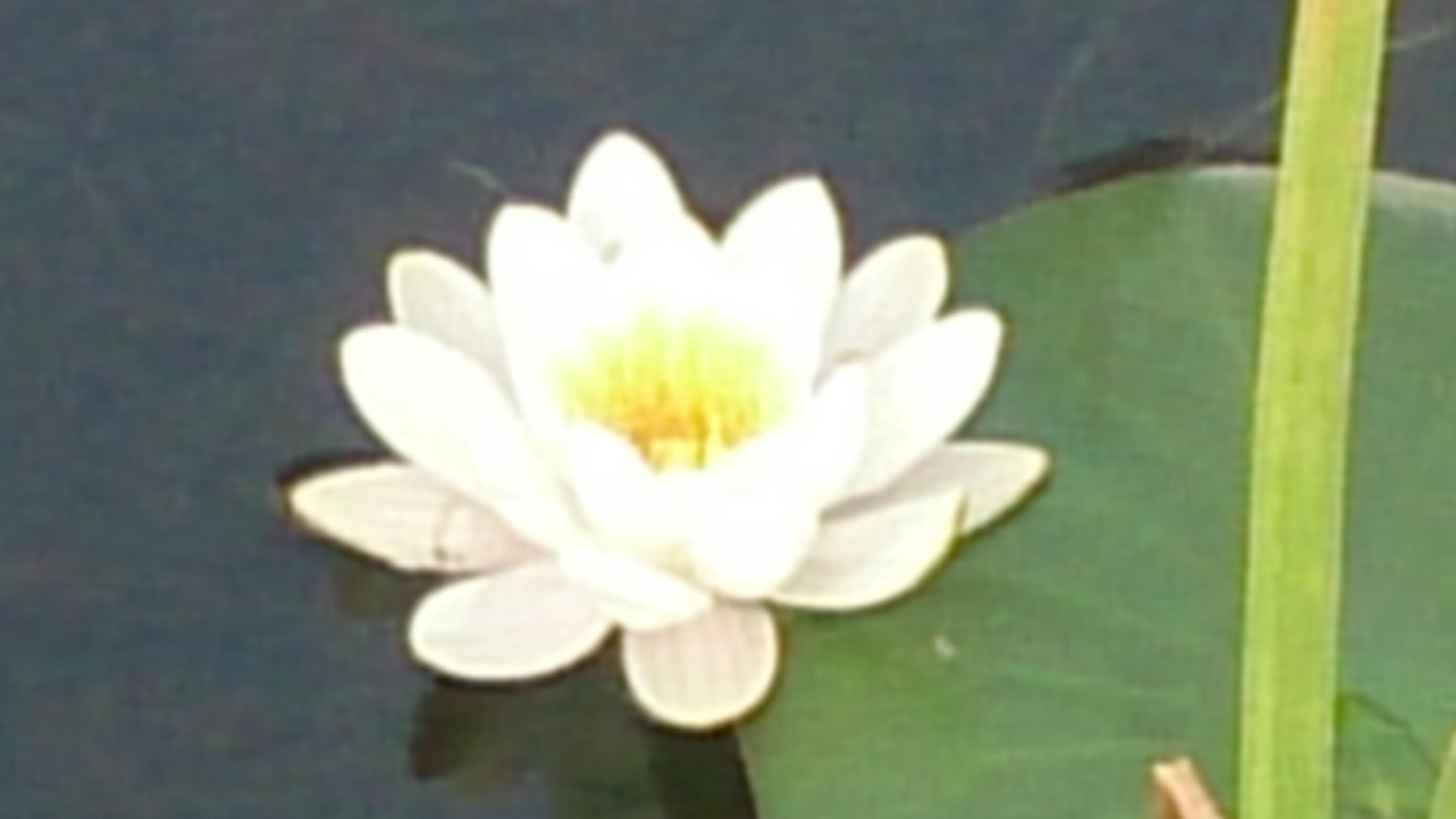 Mindfulness, un camino para despertar y mejorar tu calidad de vida